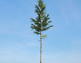3D model Tall Green Conifer