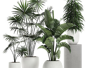 3D model Plants in a white pot for the interior 672