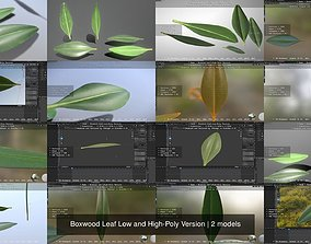 3D model Boxwood Leaf Low and High-Poly Version