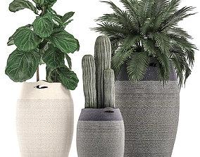 Decorative plants in flower pots 3D model 3