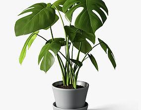 monstera plant 3D