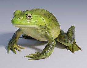 3D asset American Bullfrog - Animated