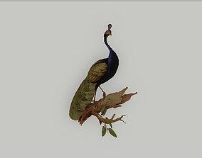 3D print model Owen Jones 1851 Peacock