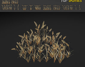 Dry Feather Grass 3D model
