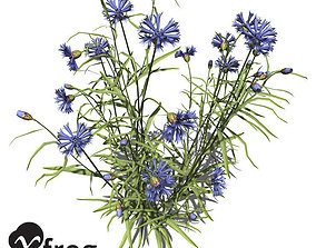 3D XfrogPlants Cornflower