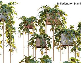 3D model Philodendron Scandens Micans flora