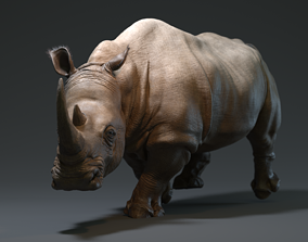 Rhino 3D asset low-poly