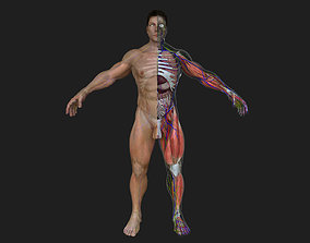 Ultimate Complete Male Anatomy 3D