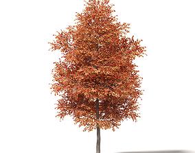 Alder 3D Model 7m bark