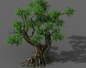 Plant - Green Tree 3 3D