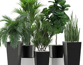 3D Plants collection 373