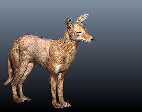 ethiopian wolf 3D model
