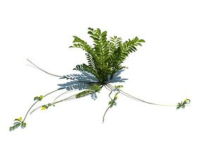 3D model Fern With Long Stems