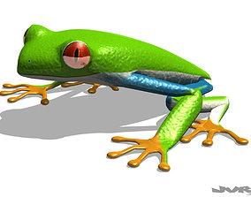 3D Rigged Tree Frog Agalychnis Callidryas