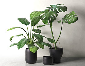 Sinnerlig Pots with Monstera and Peace Lily 3D