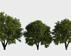 3D model Generic trees