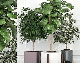 3D Plants collection 67