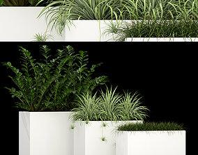 3D model Plants collection 186