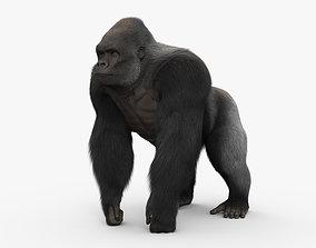 3D Gorilla HD