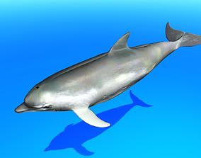 Dolphin 3D asset animated VR / AR ready