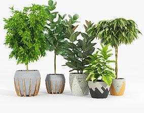 3D Ficus Set