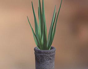 Aloe Vera potted plant 3D model
