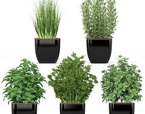 Plants collection 232 3D model