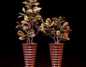 Red crotons 3D model