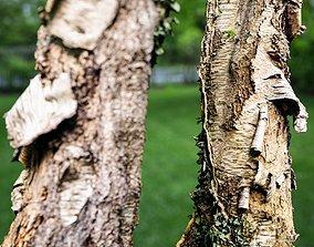 Paper Tree Bark Falling Off 3D model