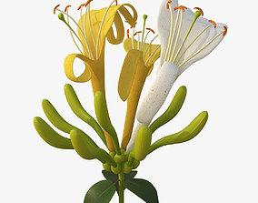 Honeysuckle Flower 3D model