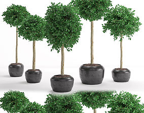 Houseplant 26 3D model PBR