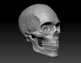science Human Male Skull 3D
