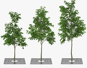 Street Tree 01 3D
