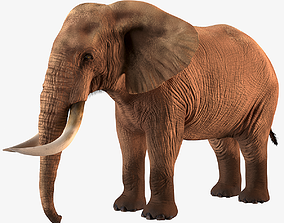 Elephant african taxidermy 3D