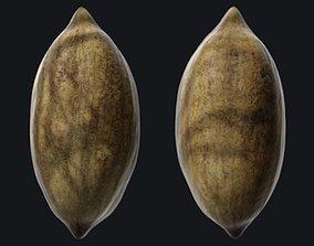 Pecan shell B 3D model realtime