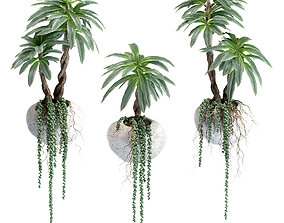 3D model Hanging succulents and palm with roots in wall 1