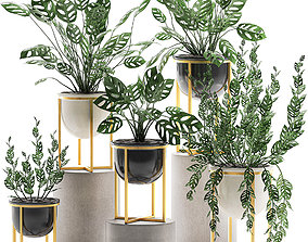 3D model Decorative plants in pots for the interior 551