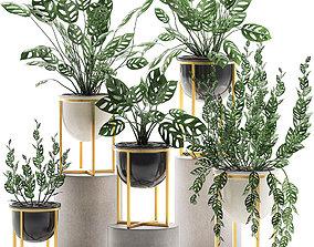 3D model Decorative plants in pots for the interior 551