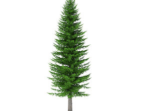 Norway Spruce Picea abies 11m 3D model