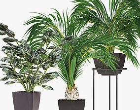 Collections Plants 08 3D model