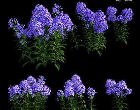 Phlox paniculata blue 3D