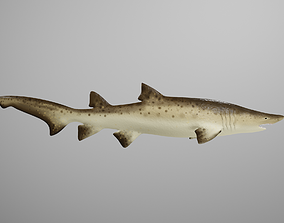 Sand Tiger Shark 3D model animated