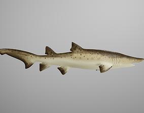Sand Tiger Shark 3D asset