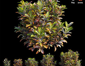 Croton plant set 17 3D model