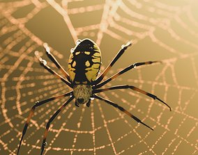 Black and Yellow Garden Spider 3D asset