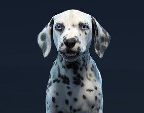 3D asset VR / AR ready anatomy Dalmatian Puppy