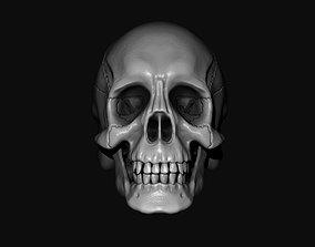 Human Skull Model 3dskulls