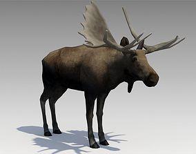 3D model Moose