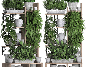 3D model Collection Exotic plants 369