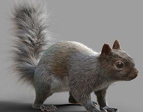 Squirrel Model 3D